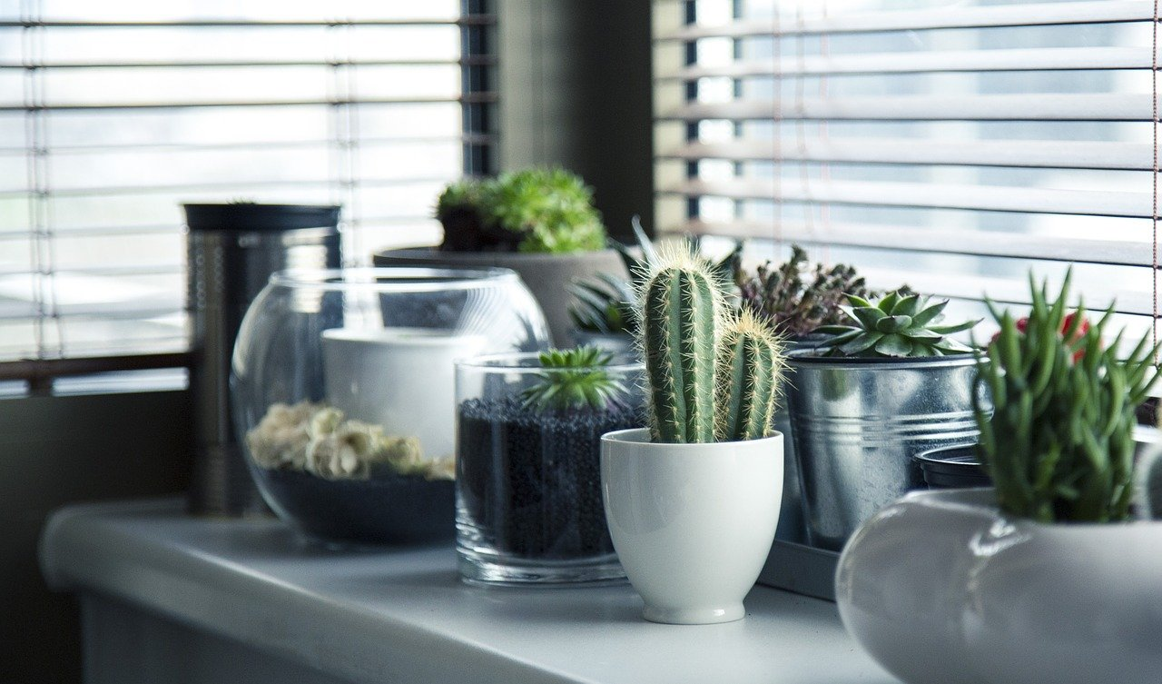 Potted plants, Cactus, and succulents for your indoors